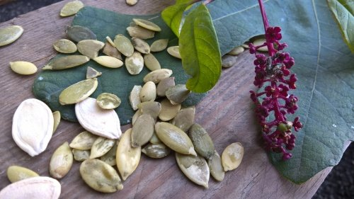 Pumpkin Seeds, Prostate and Memory, we discover the merits of these seeds